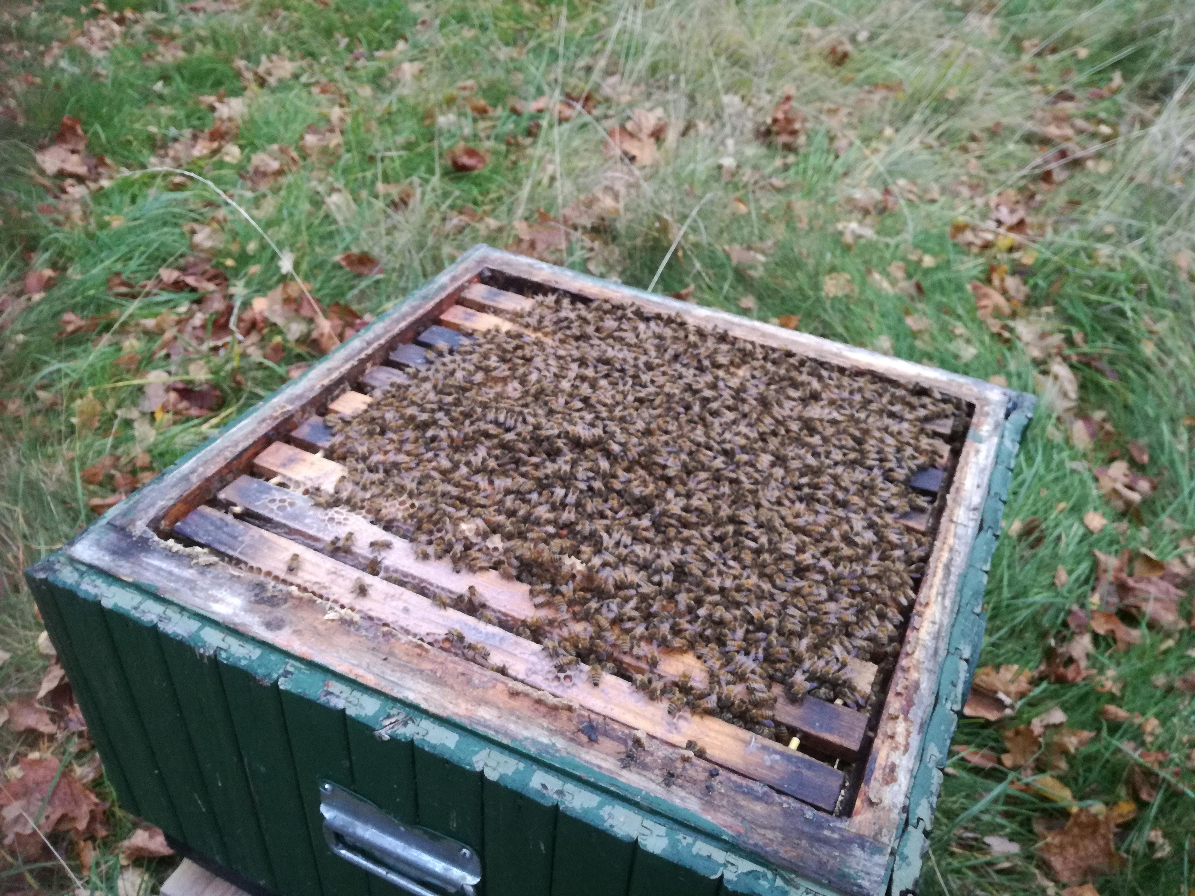 Öppen bikupa