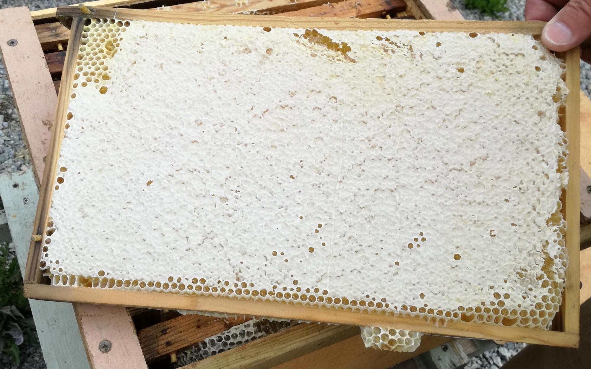 Täkt honungsram