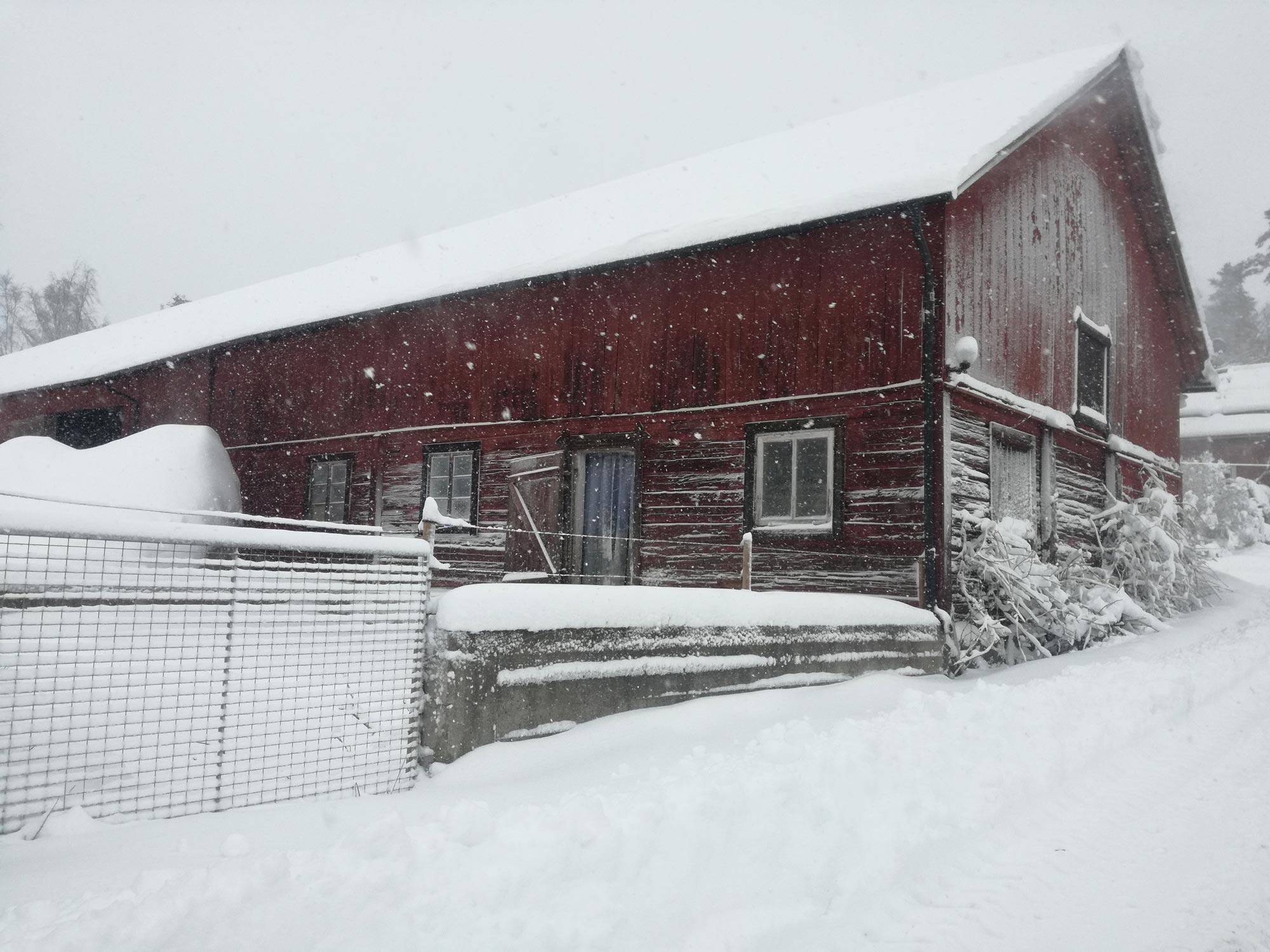 Ladugård vinter