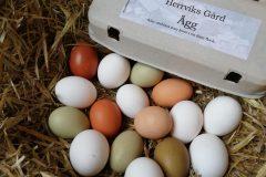 Blandade ägg